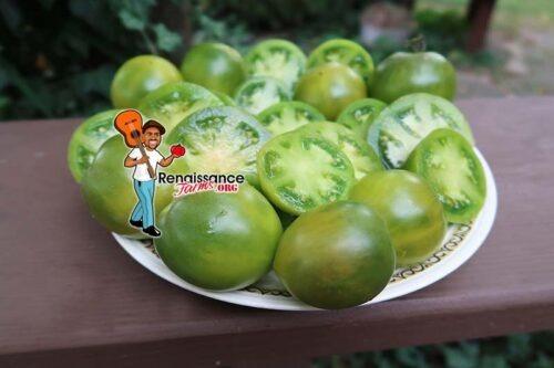 Georgia Green Cherry Tomato