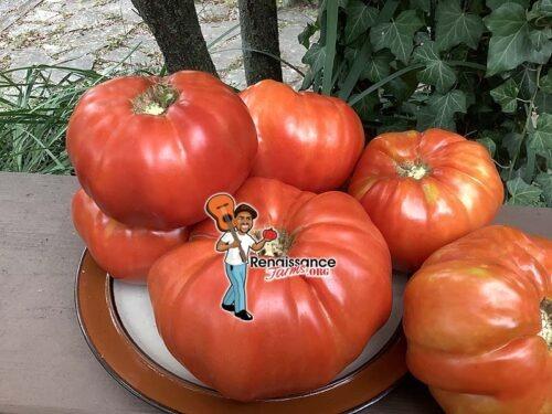 Goose Rock Tomato
