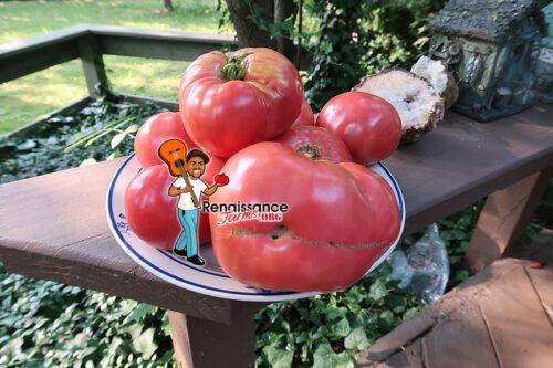 Mrs Benson Tomato