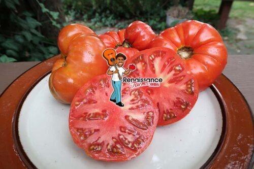 Oncle Remi Tomato
