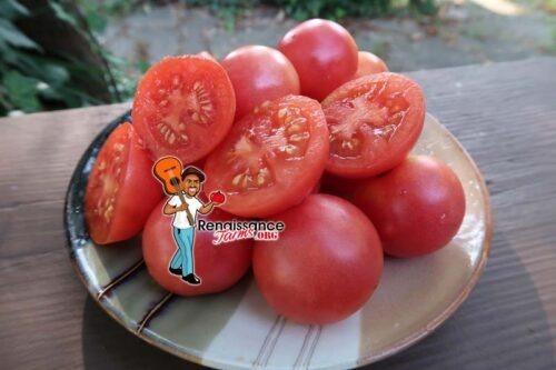 Pink Ping Pong Tomato