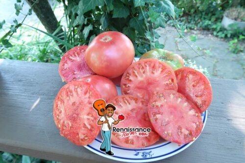 Stomp Of The World Tomato 2021