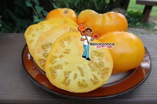 Zolotoi Vek Tomato